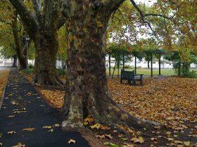 Victoria Park Autumn